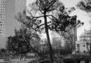 Resztki zieleni wielkich miast